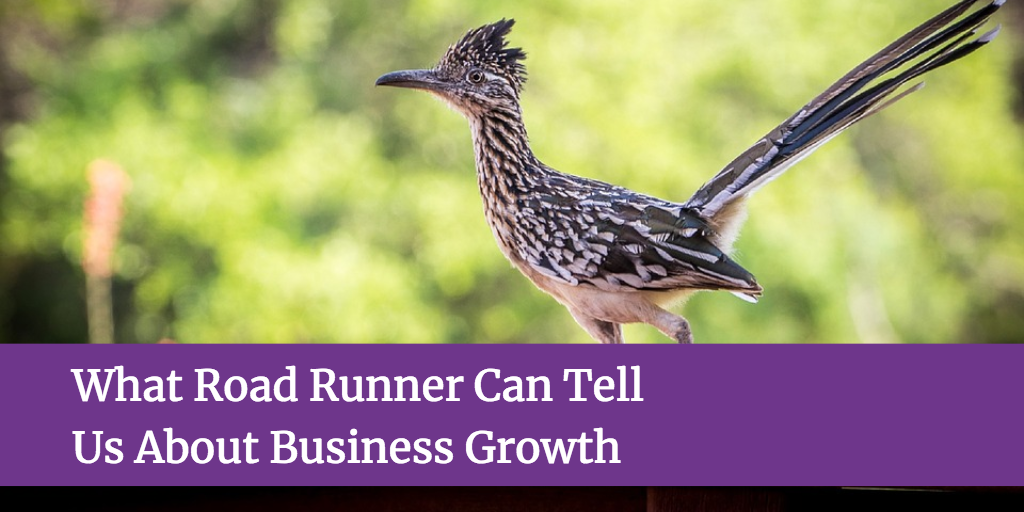 What Road Runner Can Tell Us About Business Growth